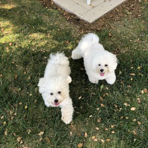 Wozs-two-newest-pups...Wozzie-Jewel