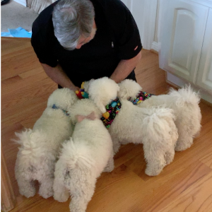 Woz gives the dogs their birthday presents.
